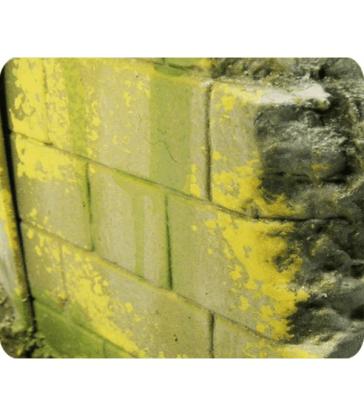 Moisissure et lichen